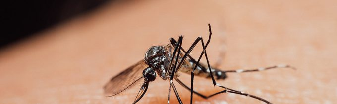 How Zika Virus Impacts the Eyes and Ocular Health